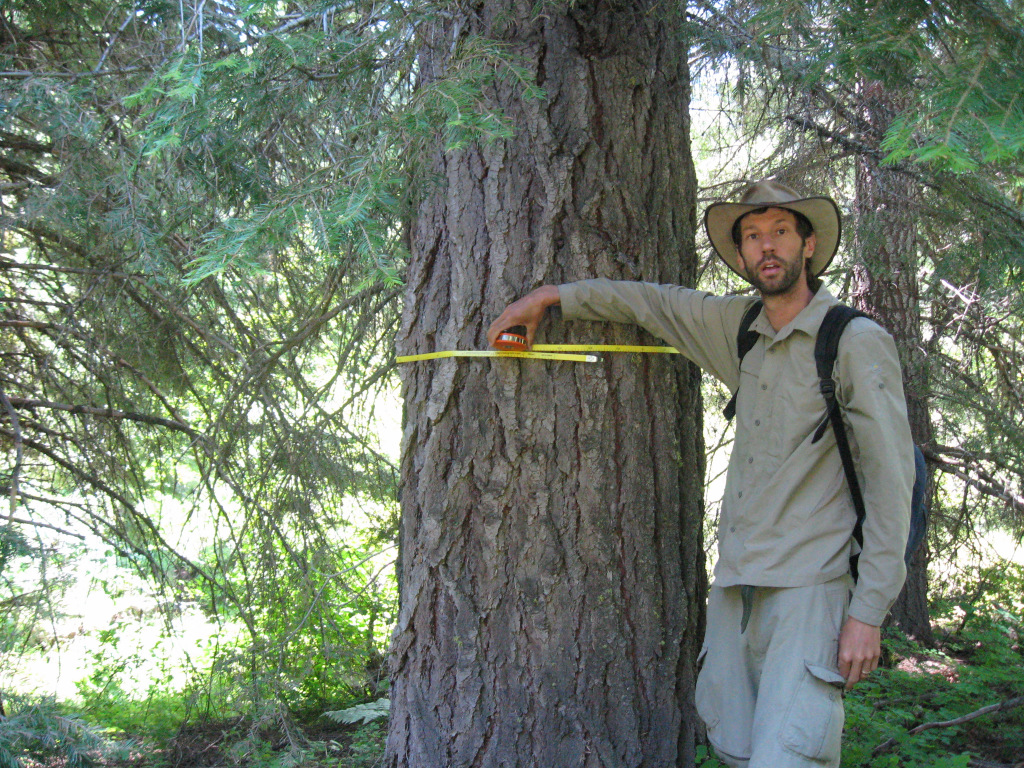 ARCS Alumni David Mildrexler measuring a Grand Fir tree